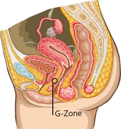 Ungefähre Lage der G-Zone in der Vagina