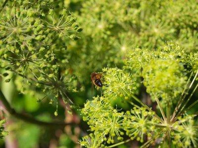 vegetative Fortpflanzung